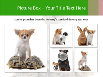 Puppy and Two Turtles PowerPoint Templates - Slide 19