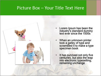 Puppy and Two Turtles PowerPoint Templates - Slide 20
