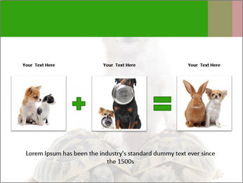 Puppy and Two Turtles PowerPoint Templates - Slide 22