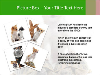 Puppy and Two Turtles PowerPoint Templates - Slide 23