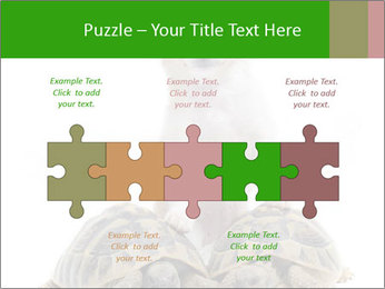 Puppy and Two Turtles PowerPoint Templates - Slide 41
