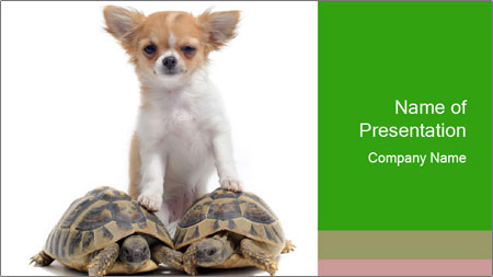 Puppy and Two Turtles PowerPoint Template