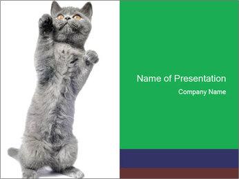 Grey British Kitten PowerPoint Template - Slide 1