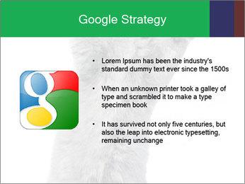 Grey British Kitten PowerPoint Template - Slide 10