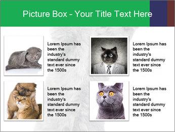 Grey British Kitten PowerPoint Template - Slide 14