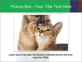 Grey British Kitten PowerPoint Template - Slide 15