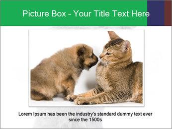 Grey British Kitten PowerPoint Template - Slide 16