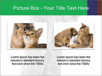 Grey British Kitten PowerPoint Template - Slide 18
