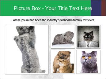 Grey British Kitten PowerPoint Template - Slide 19