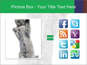 Grey British Kitten PowerPoint Template - Slide 21