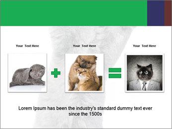 Grey British Kitten PowerPoint Template - Slide 22