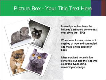Grey British Kitten PowerPoint Template - Slide 23