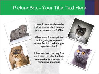 Grey British Kitten PowerPoint Template - Slide 24