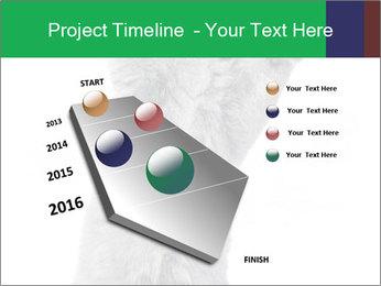 Grey British Kitten PowerPoint Template - Slide 26