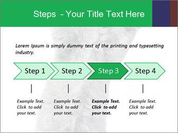 Grey British Kitten PowerPoint Template - Slide 4