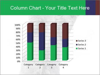 Grey British Kitten PowerPoint Template - Slide 50