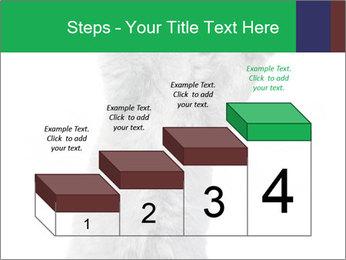 Grey British Kitten PowerPoint Template - Slide 64