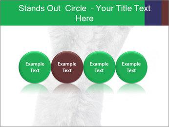 Grey British Kitten PowerPoint Template - Slide 76