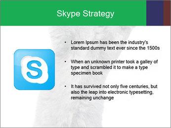 Grey British Kitten PowerPoint Template - Slide 8