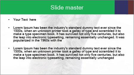 Grey British Kitten PowerPoint Template - Slide 2