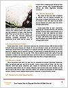 0000063947 Word Template - Page 4