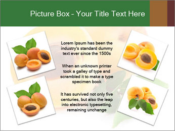 Honeyed Apricot PowerPoint Templates - Slide 24