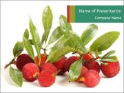 Sour Red Bayberry PowerPoint Templates
