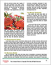 0000063965 Word Template - Page 4
