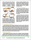 0000063968 Word Template - Page 4