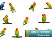 Cute Birds PowerPoint Templates