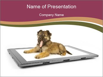 Puppy Lying on Digital Tablet PowerPoint Template