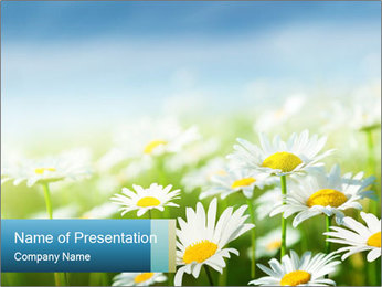 Camomile Meadow PowerPoint Template