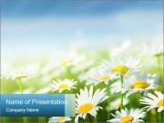 Camomile Meadow PowerPoint Templates