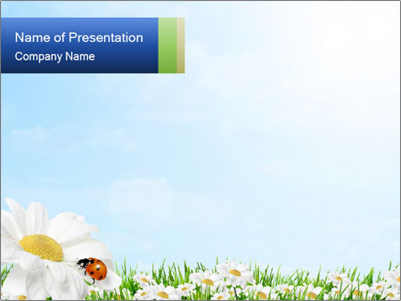 Spring Powerpoint Template | Spring Daisy Flowers Powerpoint Template Backgrounds Google