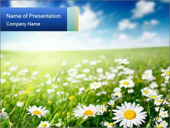 Dandelion Meadow PowerPoint Template
