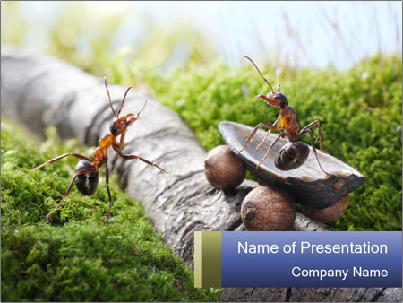 Funny Ant Fairytale PowerPoint Template, Backgrounds & Google Slides ...