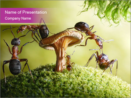 Insects sitting on mushroom powerpoint template backgrounds id insects sitting on mushroom powerpoint template toneelgroepblik Image collections