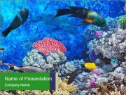 Beautiful Aquarium PowerPoint Templates
