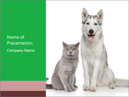 husky dog and cat powerpoint template & backgrounds id 0000068284, Modern powerpoint