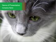 0000068678 PowerPoint Templates