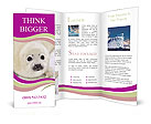 0000069046 Brochure Templates