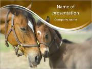Cavallo Con Foal I pattern delle presentazioni del PowerPoint