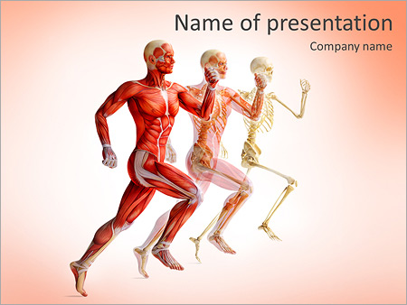study anatomy powerpoint template & backgrounds id 0000007316, Modern powerpoint