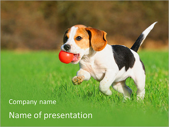 Puppy With Toy PowerPoint Template