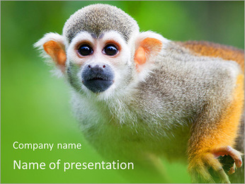 Ape PowerPoint Template