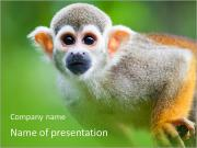 Ape PowerPoint Templates