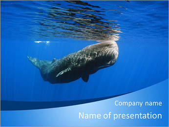 Whale PowerPoint Template