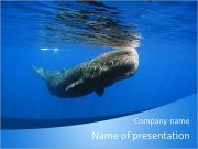 Whale PowerPoint Templates