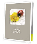 Ladybird Presentation Folder