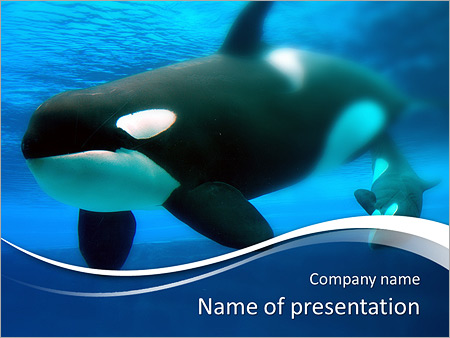 whale in ocean powerpoint template & backgrounds id 0000007421, Modern powerpoint